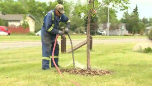 City asking for help with dry trees