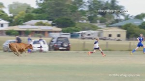 Bull interrupts kids soccer game, chases players off pitch
