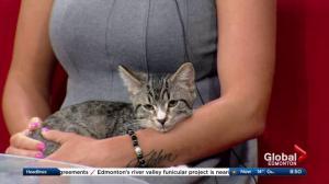 Edmonton Humane Society: Athena & Pokey