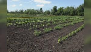 Winnipeg entrepreneur brings farms into the city