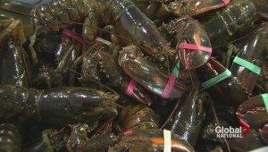 Nova Scotia seeing booming lobster sales in China