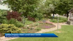 With latest installment of Your City we learn about the Kingston Water Conservation Garden.