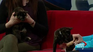 Pet of the Week: Tippy and Patches