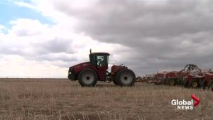 Alberta farmers say it's too early to panic about possible drought