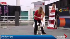 The Science of Superdogs takes over Gardenscape