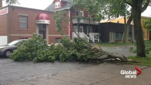 Branches down, lights out in Halifax