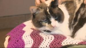 Adopt a Pet: Feb 2