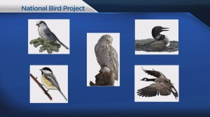 Canada looking to name a national bird