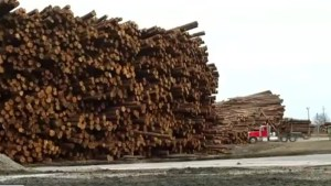 Trump imposes new tax on Canadian softwood