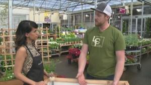 Gardenworks: Planter boxes