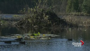 The fight to save Beaver Lake