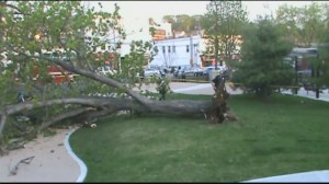 Large tree falls on playground, injuring 2 in Massachusetts
