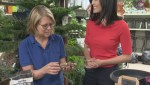 Get Gardening with Global News Morning – Planting Bulbs