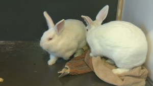 Adopt a Pet: Snowdrop and Mallow