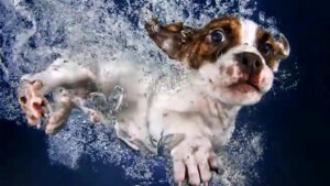 Nothing cuter than these puppies underwater