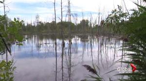 Montreal Technoparc wildlife in danger
