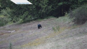 Mysterious blue headed bear spotted off Highway 7