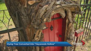 Fairy tale tree in Brampton 'Grows' in Popularity
