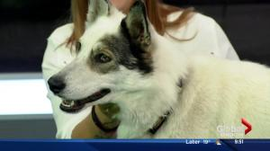Adopt a Pet: Toby and Daisy from SCARS