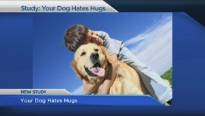 New UBC research says your dog hates hugs