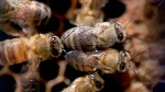 Impact of Vancouver's ban of neonicotinoid on bee population