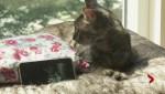 Is Larry the cat cafe tabby a fan of Adele?