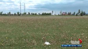 City of Edmonton sports fields to be sprayed for dandelions