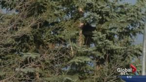Black bear stirs up southwest neighbourhood
