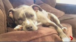 Owner of dog shot by police speaks out