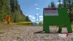 Bear experts warn of human encounters after Canmore cyclist attacked
