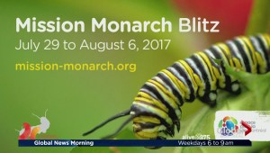 Community Events: Mission Monarch Blitz