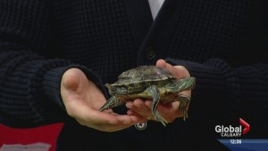 Pet of the Week: Franklin the turtle