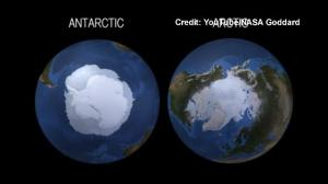 The Arctic and the Antarctic Respond in Opposite Ways