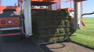 Homegrown family business keeping the grass green for 47 years