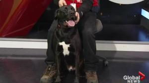 Edmonton Humane Society: Kevin and Rascal