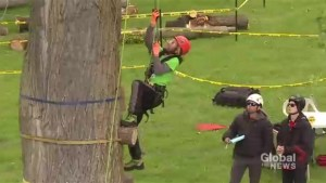Annual tree climbing championships held in Dorval