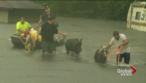 Louisiana under state of emergency as heavy flooding continues