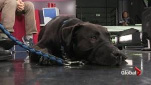 Adopt a Pet: Georgia
