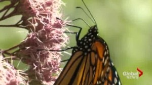 Botanical Gardens offer opportunity for families to discover and engage in the life cycle of monarchs