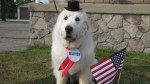 Duke the dog re-elected for third term as mayor of Minnesota town