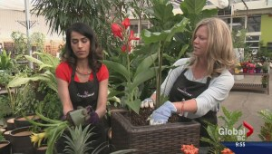 Gardening: Tropicals Made Easy