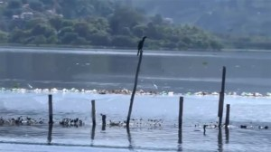 RAW: Rio de Janeiro lagoon in dire need of cleanup