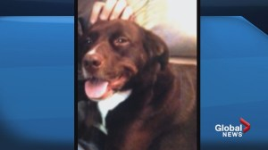 Sentencing decision reserved for Calgary man who slaughtered tenants' family dog
