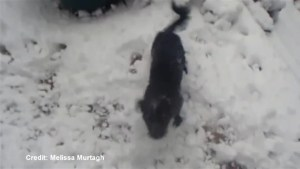 Puppy experiences first snowfall in Calgary