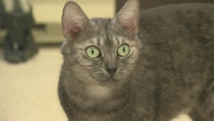 Adopt a Pet: Jul 4 'Miley and Hailey'