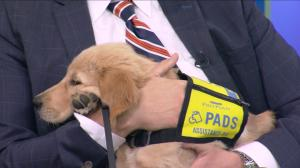 PADS is looking for volunteers to help train assistance dogs