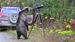 Watch the moment grizzly bear became viral photographer