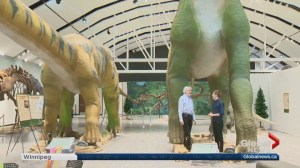 Manitoba Museum gets huge for new display