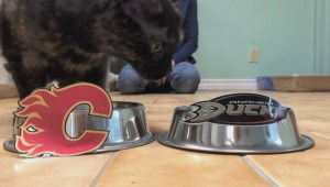 Gil Tucker: Flames Feline