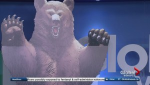 Illustrator previews new book about bears invading Canada